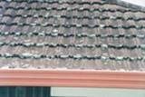 Ant stogo augantys pelėsiai
